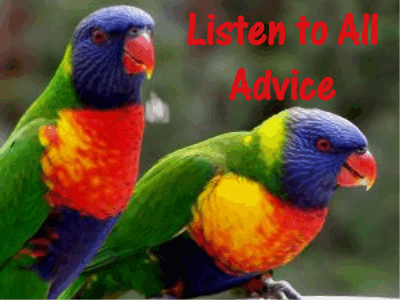 Parrots: Listen to all advice