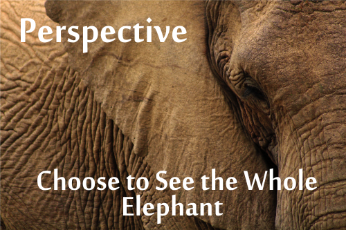 "partial picture of elephant ""Perspective: Choose to see the whole elephant"""