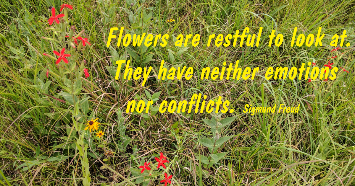 Flowers are restful to look at. They have neither emotions or conflicts. Sigmund Freud