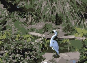 Tropical Garden Mindfulness Audio Download