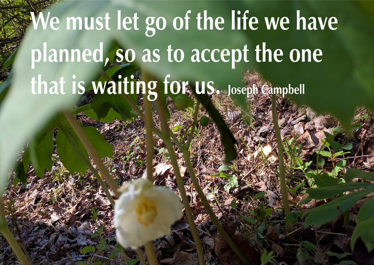 We must let go of the life we have planned, so as to accept the one that is waiting for us. Joseph Campbell