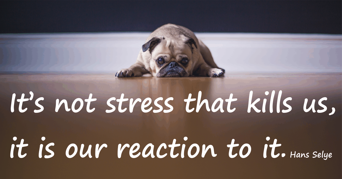 It's not stress that kills us, it is our reaction to it.